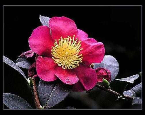 Schönheiten aus den Botanischen Garten