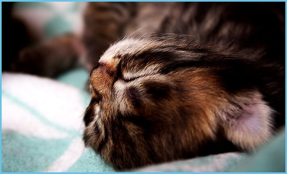 Schönheitsschlaf für kleine Kitten.
