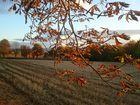 Schöninger Herbst....