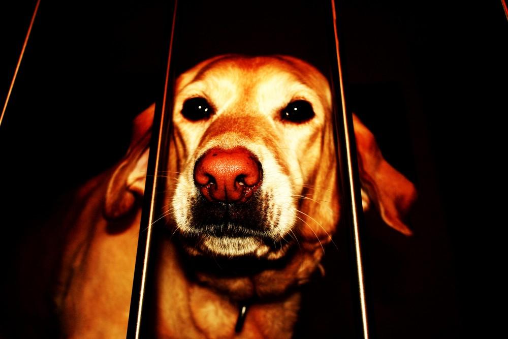schönster Hund :)