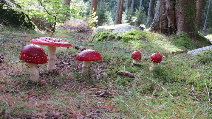 SCHÖNWALD (Forêt Noire)