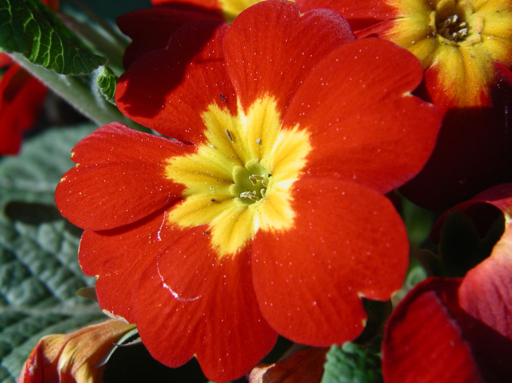 Schöööne Blume