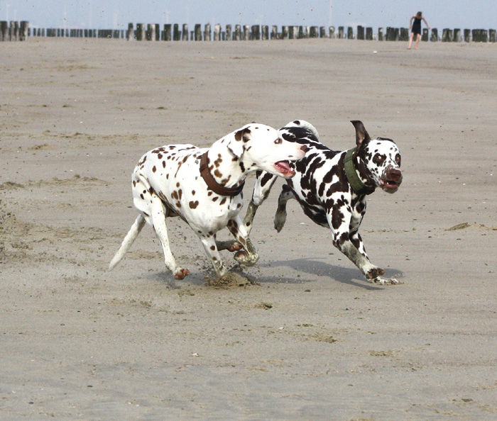 Schokopunkte in action