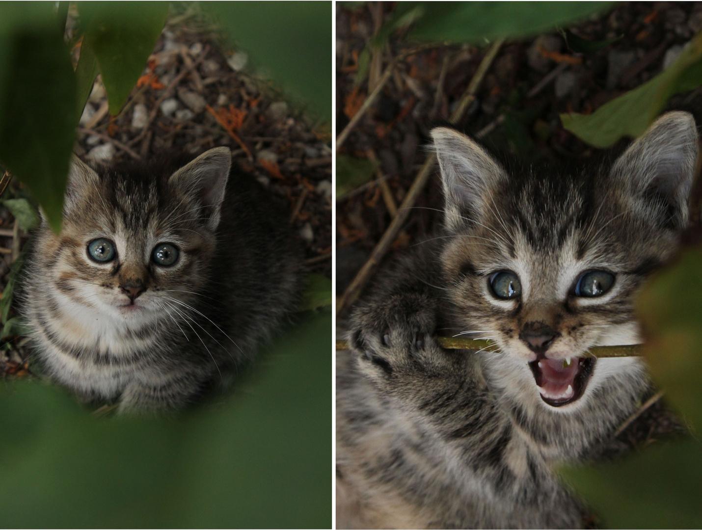 """""""Schon die kleinste Katze ist ein Meisterwerk"""""""