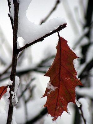 schon fast winter