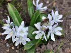 Schon kommen die ersten Besucher....kaum ist der Frühlingsputz gemacht