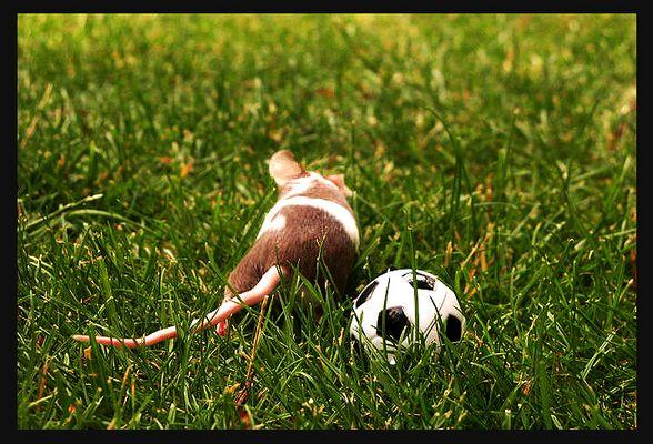 Schon wieder den 11 Meter verschossen. Keine Lust mehr auf Fußball...