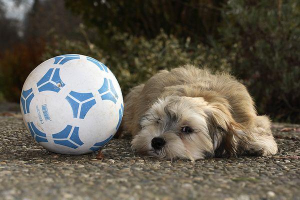 schon wieder Fussball
