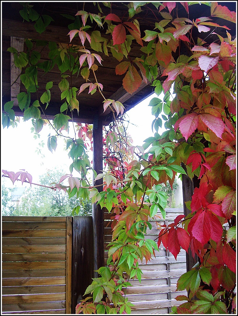 ...schon wieder Herbst.