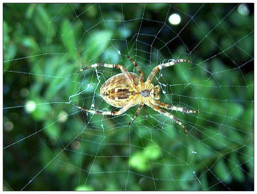 Schon wieder ne Spinne...