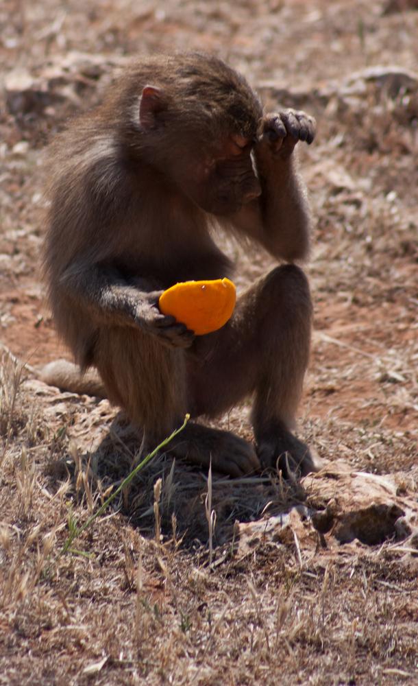 schon wieder Orange