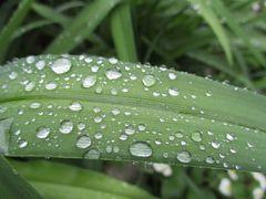 Schon wieder Regen