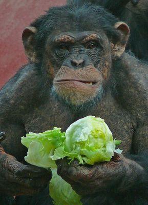 Schon wieder Salat?