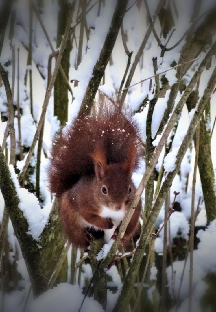 schon wieder schnee ...