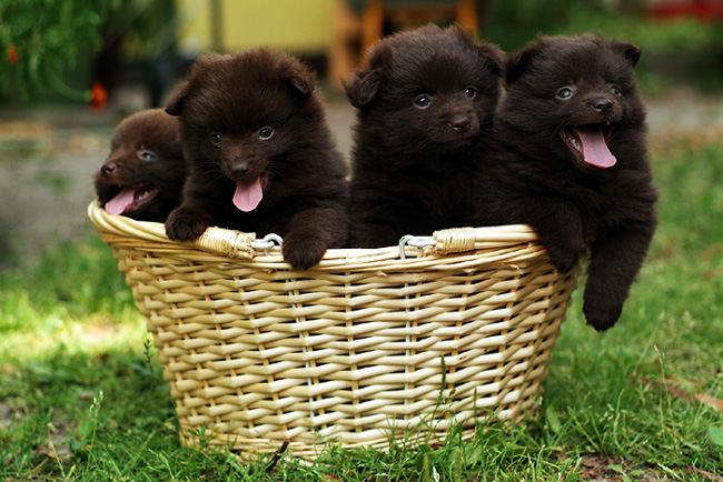 schon wieder so ein Foto mit Hunden in einem Korb ;)