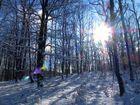 schon wieder Winterwald in nicht aufhören wollendem Winter ...