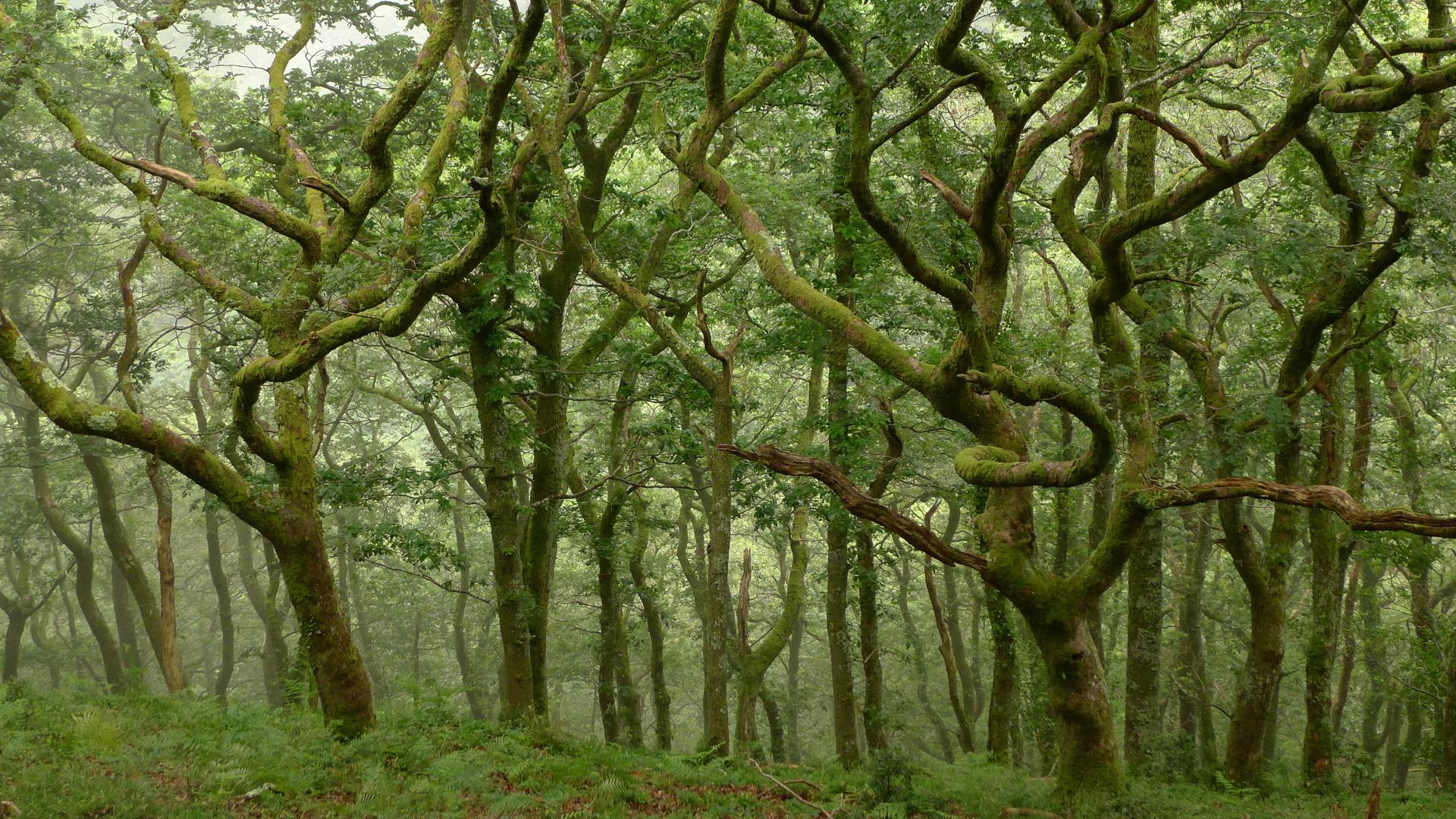 Schotten in Devon