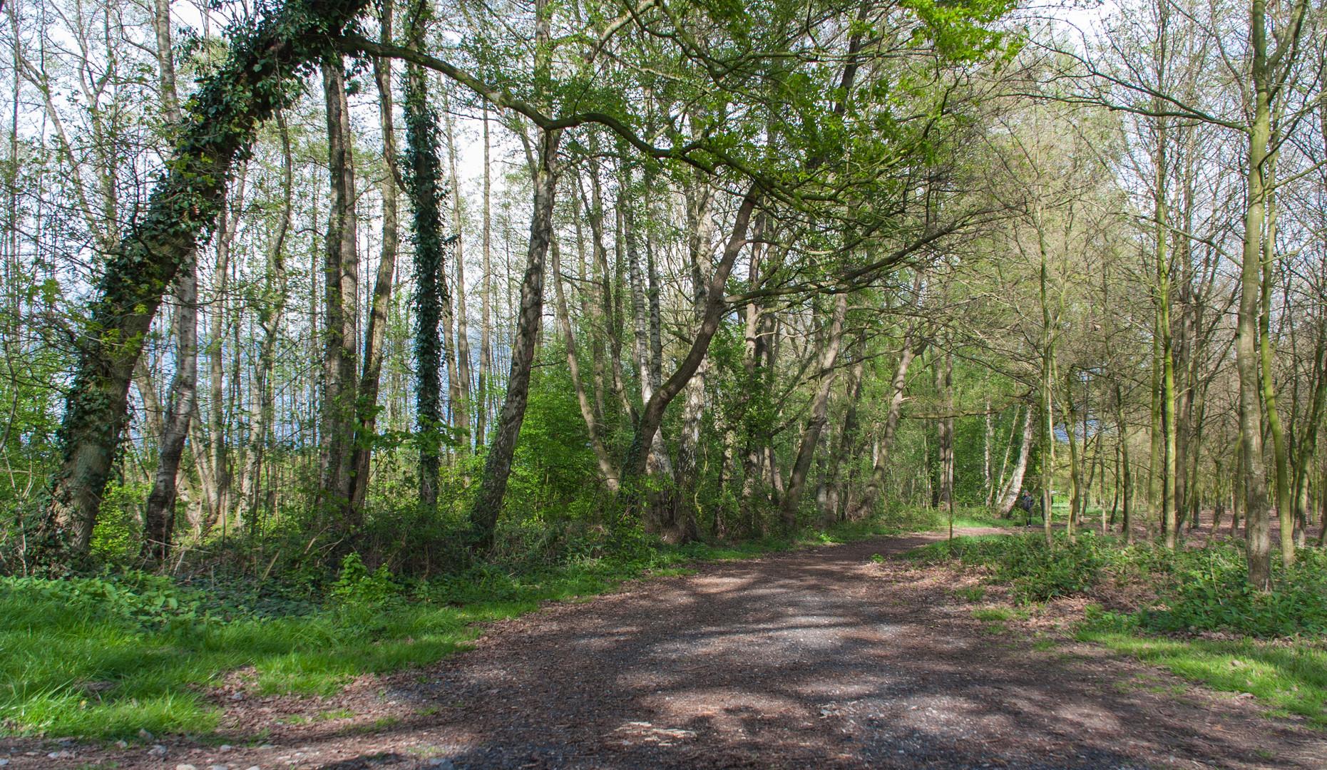 Schotterweg im Wald