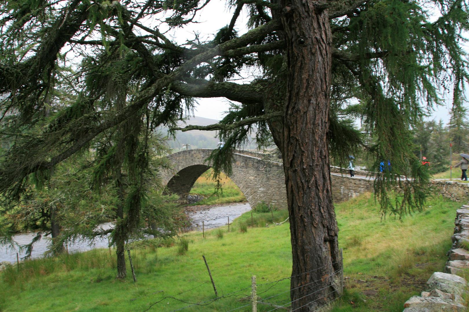 Schottland 2011 9