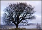 Schottland - eine Winterreise (45)