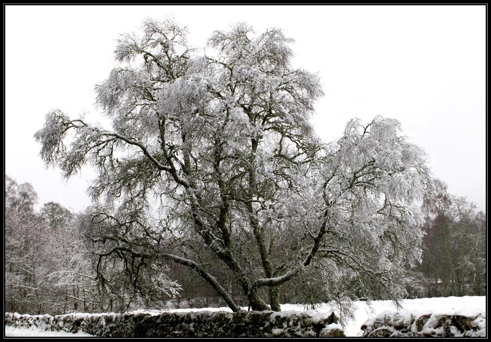 Schottland - eine Winterreise (49)
