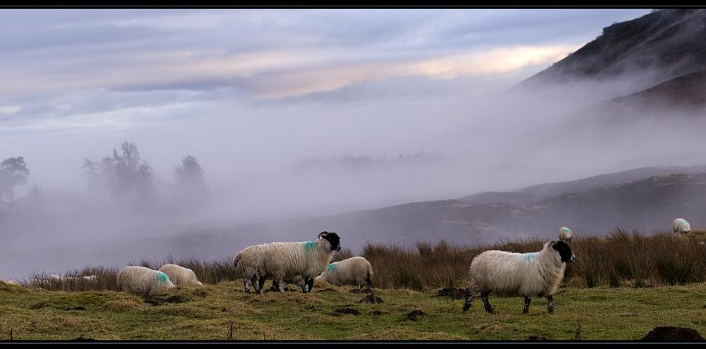 Schottland - eine Winterreise (50)