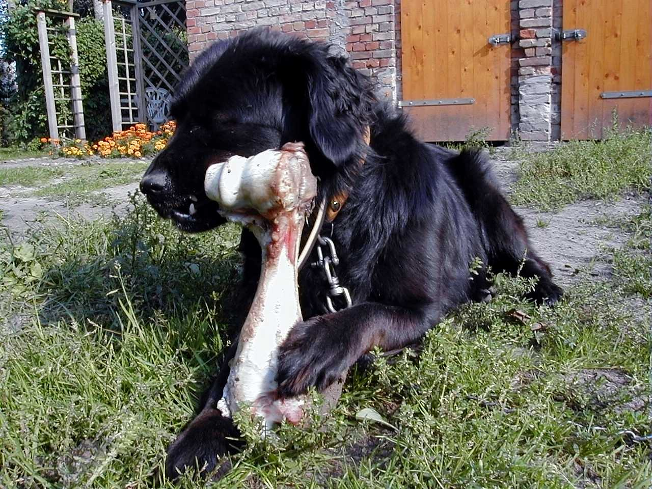 schraap,knirsch krach,-DIE Zahnbürste für Hunde