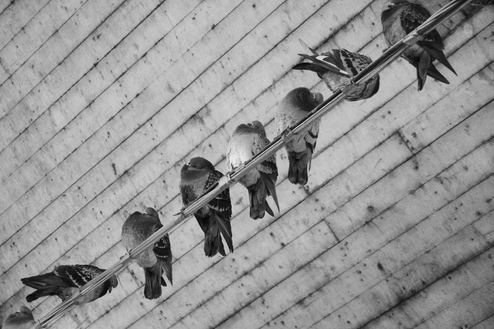 schräge vögel