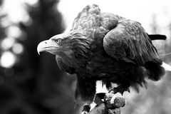 schräge Vögel#02