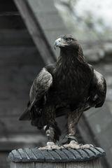 schräge Vögel#05