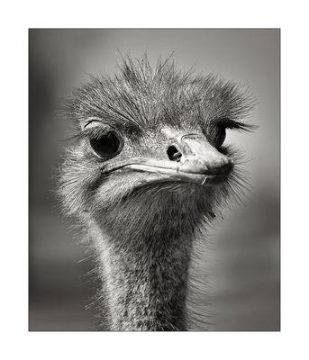 Schräger (aber so bezaubernder) Vogel :-)