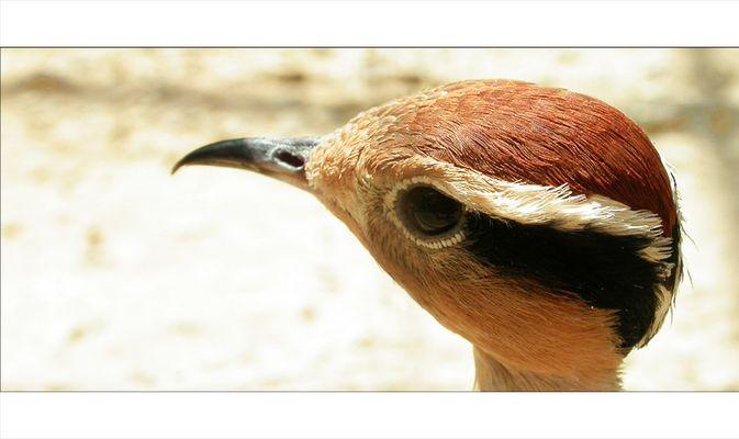 Schräger Vogel-Blick