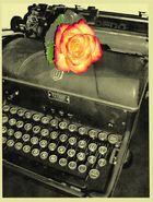 schreibmaschiene rose