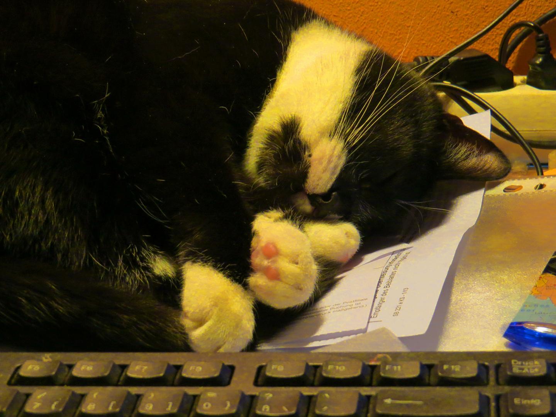 Schreibtischjob - hin und wieder...