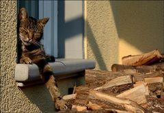 Schröder`s Siesta - oder: Mein Holz, Mein Haus...