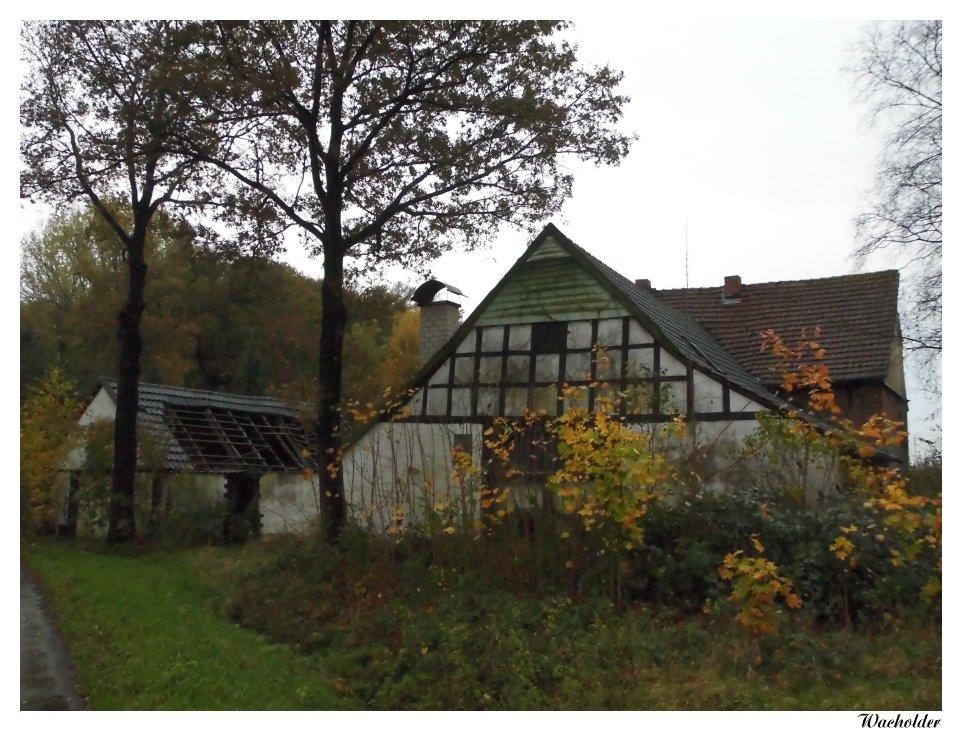 Schrott-Immobilie (1)
