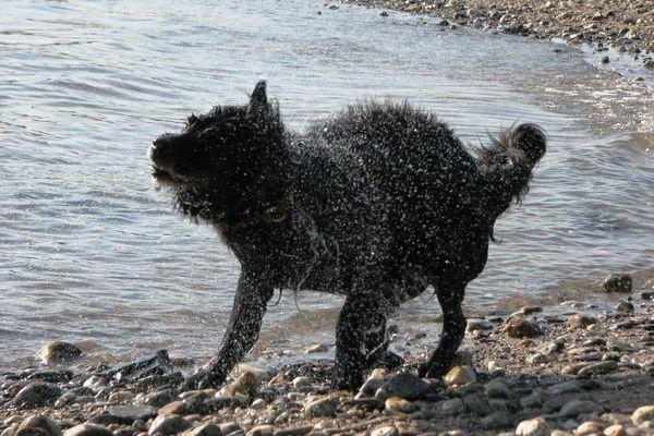 Schüttelhund am Rhein