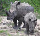 schützt die Nashörner