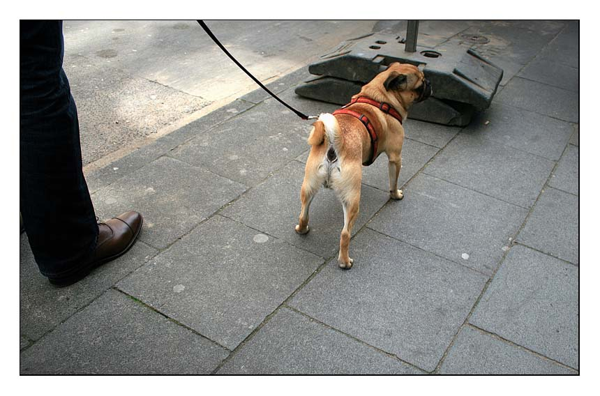 Schuh, Leine und Hund...