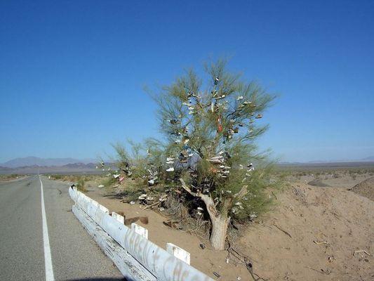 Schuhbaum an der Route 66