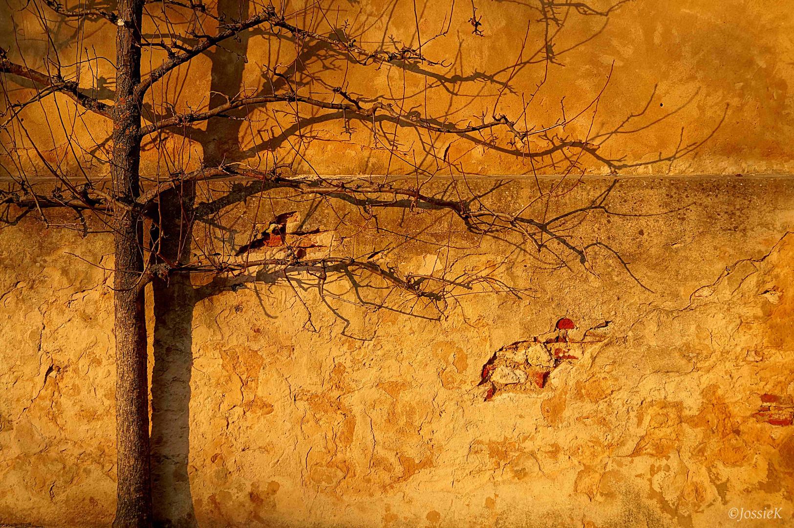 Schulhofmauer & Baum
