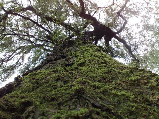 Schutz im Schatten des Baumes