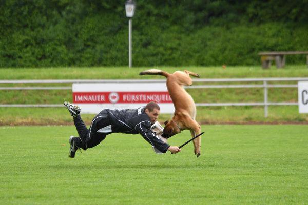 Schutzdienst im Hundesport - Angriff auf den Hund aus der Bewegung