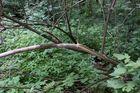 Schutzlos der Natur ausgeliefert