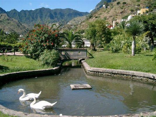 Schwäne auf La Gomera