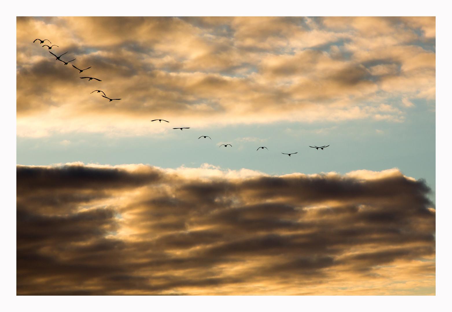 Schwäne, Ostern gegen 06:30 Uhr 2013 an der Ostsee