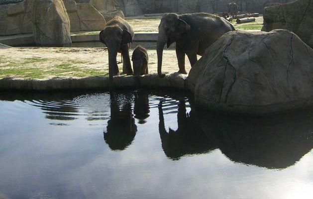 schwäne spiegeln elefanten