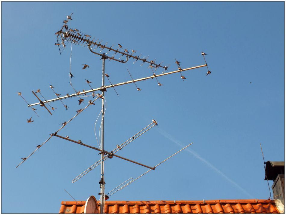 Schwalben-Antenne ...