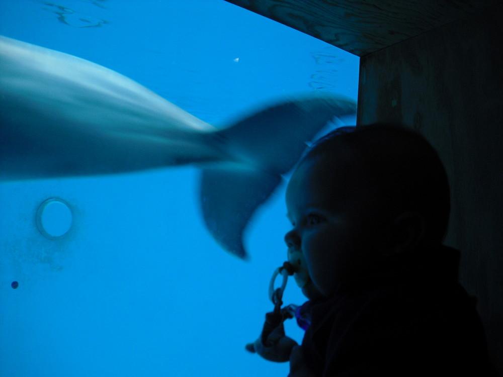 Schwamm da gerade ein Delphin vorbei?