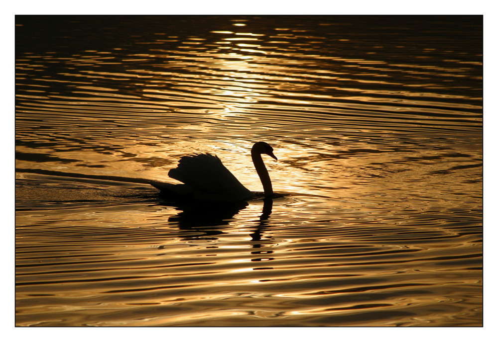 Schwan auf einem See aus flüssigem Gold